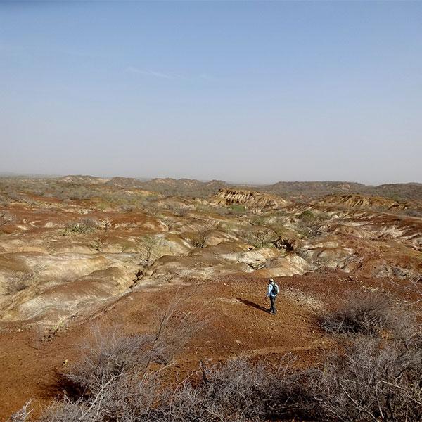 Paleontología Extrema Tortugas más grandes que las Galápagos habitaron en los Andes hace 13 millones de años