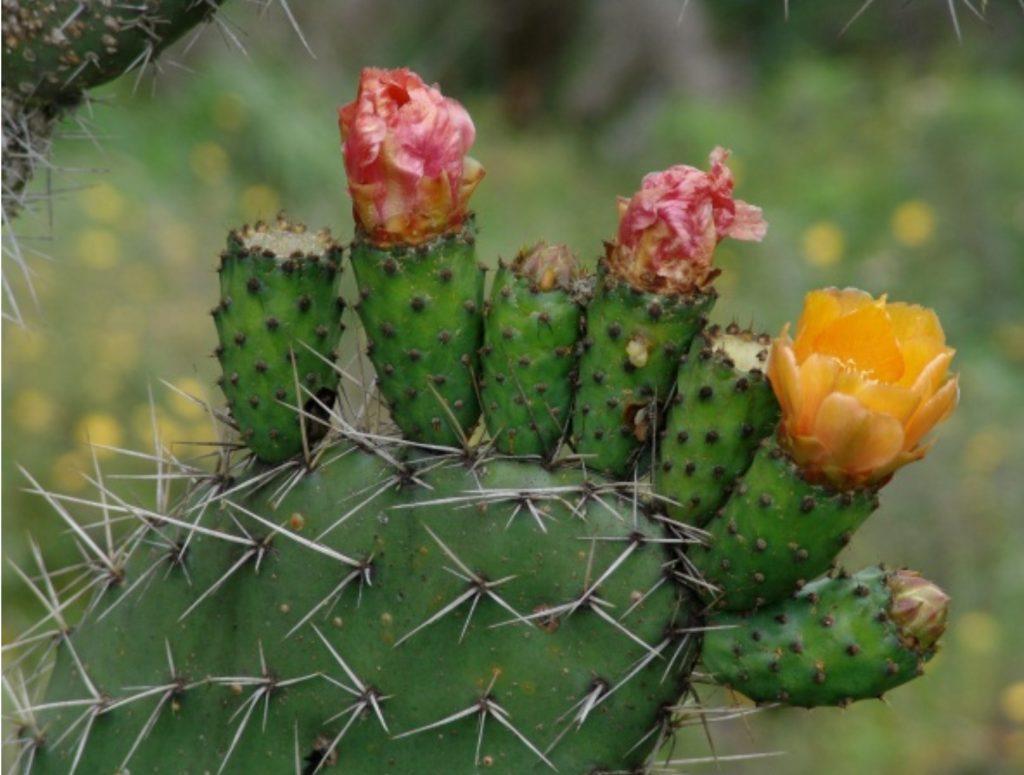 Patrones de diversidad de plantas en ecosistemas secos del Neotrópico