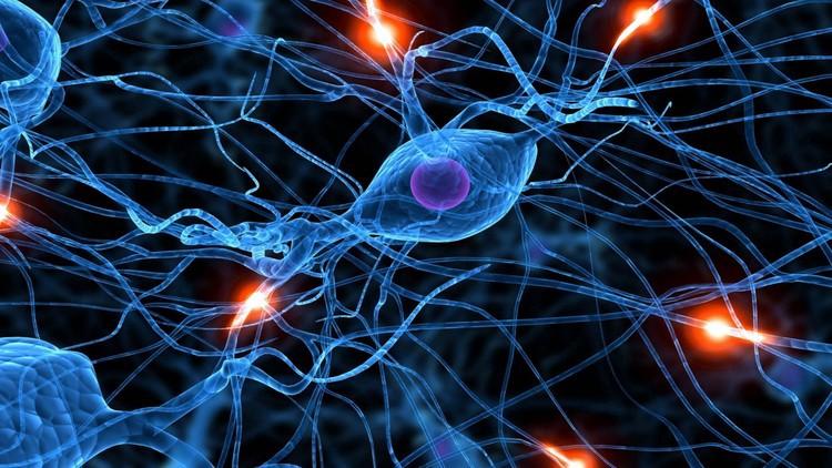 Jornada de las Redes Neuronales Artificiales y aplicaciones