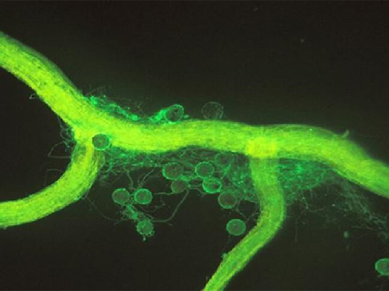 Investigadores de Yachay Tech buscan crear biofertilizantes